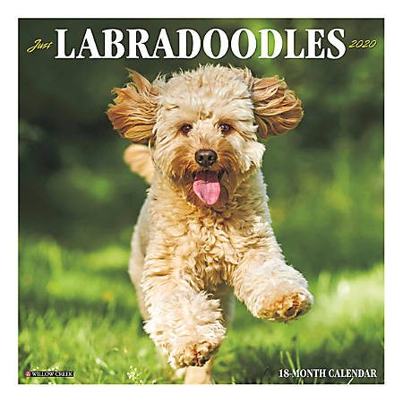 """Willow Creek Press Animals Monthly Wall Calendar, 12"""" x 12"""", Labradoodles, January To December 2020"""