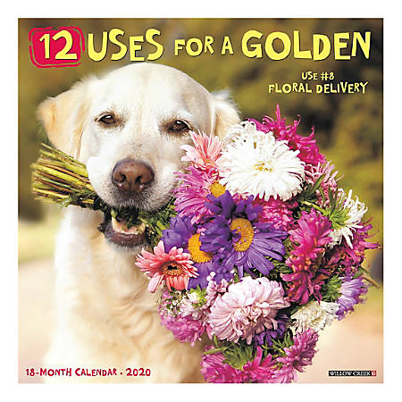 """Willow Creek Press Animals Monthly Wall Calendar, 12"""" x 12"""", 12 Uses For A Golden, January To December 2020, 04944"""