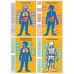 Carson Dellosa Human Body Bulletin Board