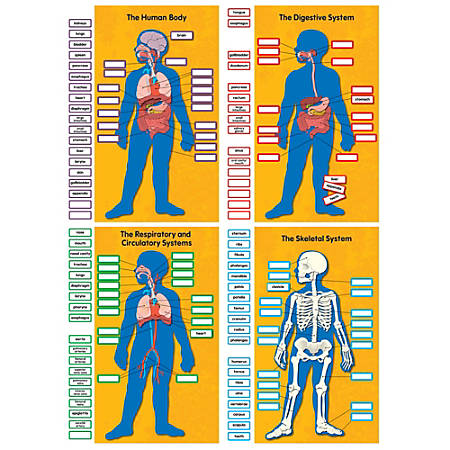 Carson-Dellosa Human Body Bulletin Board Set