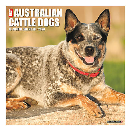 """Willow Creek Press Animals Monthly Wall Calendar, 12"""" x 12"""", Australian Cattle Dogs, January To December 2020"""