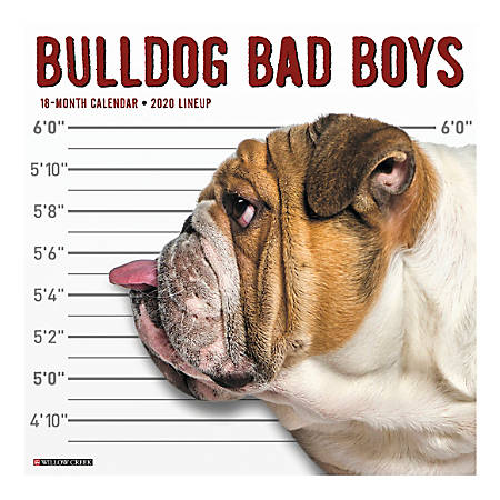 "Willow Creek Press Animals Monthly Wall Calendar, 12"" x 12"", Bulldog Bad Boys, January To December 2020"