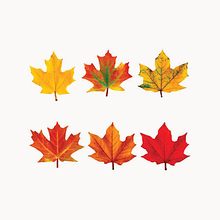 Trend® Classic Accents® Variety Pack, Maple Leaves, Pre-K To Grade 12, Pack Of 36