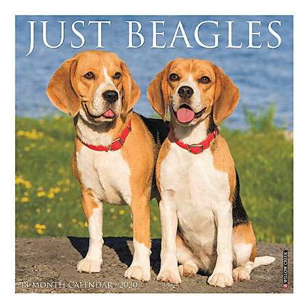 "Willow Creek Press Animals Monthly Wall Calendar, 12"" x 12"", Beagles, January To December 2020"