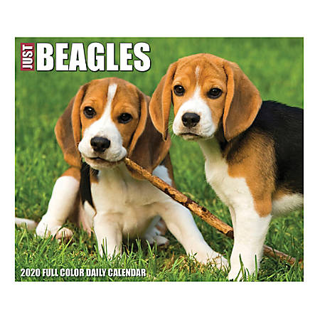 "Willow Creek Press Page-A-Day Daily Desk Calendar, 5-1/2"" x 6-1/4"", Just Beagles, January to December 2020, 08751"