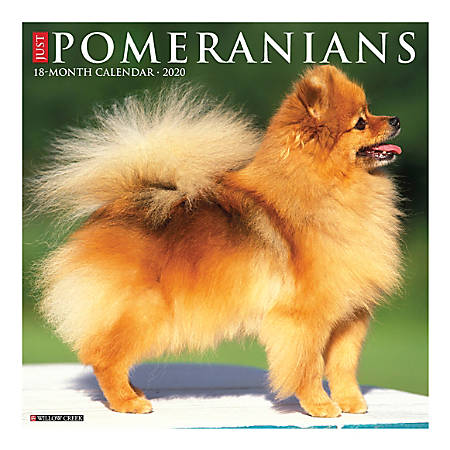 "Willow Creek Press Animals Monthly Wall Calendar, 12"" x 12"", Pomeranians, January To December 2020"