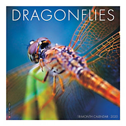"Willow Creek Press Animals Monthly Wall Calendar, 12"" x 12"", Dragonflies, January To December 2020"