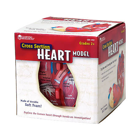 "Learning Resources® Human Heart Cross Section Model, 5 1/2"" x 6"", Grades 6 - 12"