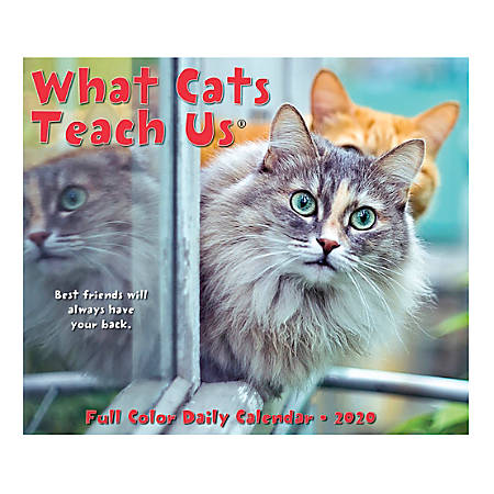 "Willow Creek Press Page-A-Day Daily Desk Calendar, 5-1/2"" x 6-1/4"", What Cats Teach Us, January to December 2020, 09017"