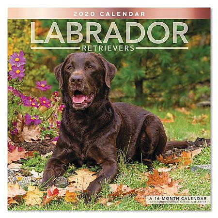 "Mead® Labrador Retrievers Monthly Wall Calendar, 12"" x 12"", January to December 2020, ODE341-10"