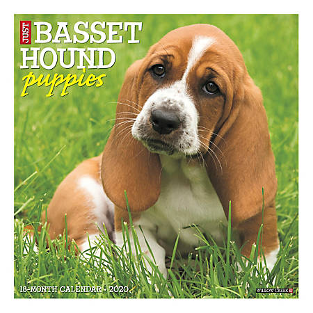 "Willow Creek Press Animals Monthly Wall Calendar, 12"" x 12"", Basset Hound Puppies, January To December 2020"