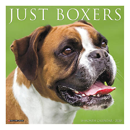 "Willow Creek Press Animals Monthly Wall Calendar, 12"" x 12"", Boxers, January To December 2020"