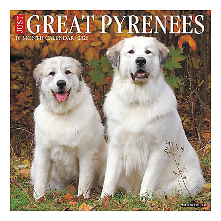 """Willow Creek Press Animals Monthly Wall Calendar, 12"""" x 12"""", Great Pyrenees, January To December 2020"""