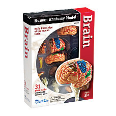 Learning Resources Model Brain Anatomy Set