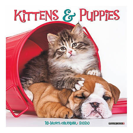 """Willow Creek Press Animals Monthly Wall Calendar, 12"""" x 12"""", Kittens & Puppies, January To December 2020"""
