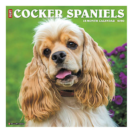 """Willow Creek Press Animals Monthly Wall Calendar, 12"""" x 12"""", Cocker Spaniels, January To December 2020"""