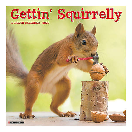 "Willow Creek Press Animals Monthly Wall Calendar, 12"" x 12"", Gettin' Squirrelly, January To December 2020"