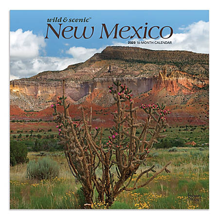 """Brown Trout Monthly Wall Calendar, New Mexico, 24"""" x 12"""", January To December 2020"""