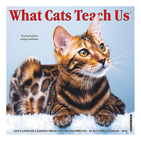 """Willow Creek Press Animals Monthly Wall Calendar, 12"""" x 12"""", What Cats Teach Us, January To December 2020"""