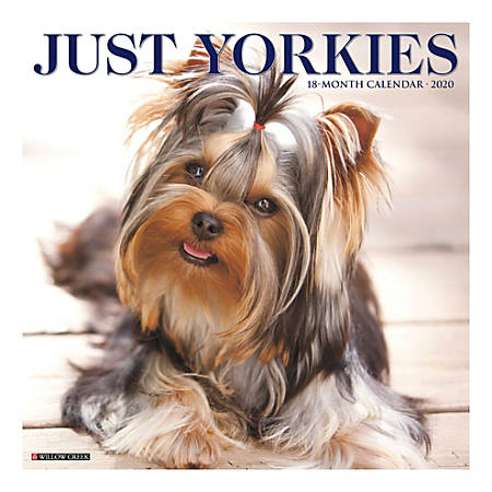 The tiny Yorkshire Terrier, typified by its silky blue and tan coat, is a perky, clever and loyal companion.  All the charms of this popular breed are captured in twelve delightful, full color photographs.