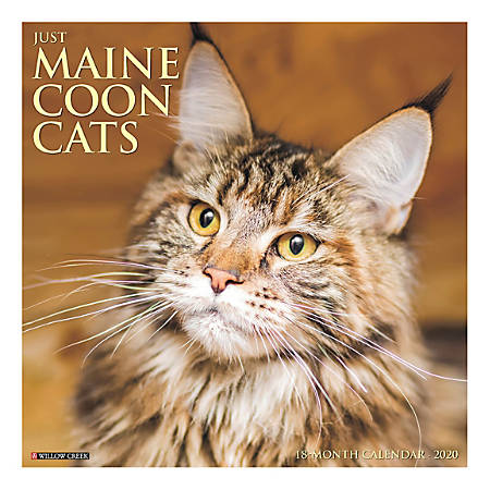 "Willow Creek Press Animals Monthly Wall Calendar, 12"" x 12"", Maine Coon Cats, January To December 2020"
