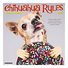 The finest virtues of the Chihuahua
