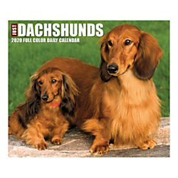 """Willow Creek Press Page-A-Day Daily Desk Calendar, 5-1/2"""" x 6-1/4"""", Just Dachshunds, January to December 2020, 08843"""