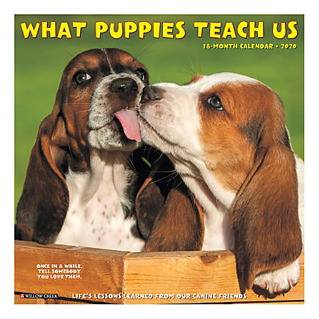 "Willow Creek Press Animals Monthly Wall Calendar, 12"" x 12"", What Puppies Teach Us, January To December 2020"