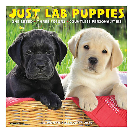 """Willow Creek Press Animals Monthly Wall Calendar, 12"""" x 12"""", Lab Puppies, January To December 2020"""