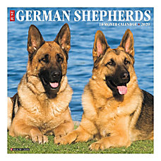 German Shepherds are a highly popular