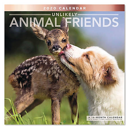 """Mead® Unlikely Animal Friends Monthly Wall Calendar, 12"""" x 12"""", January To December 2020, ODE33710"""
