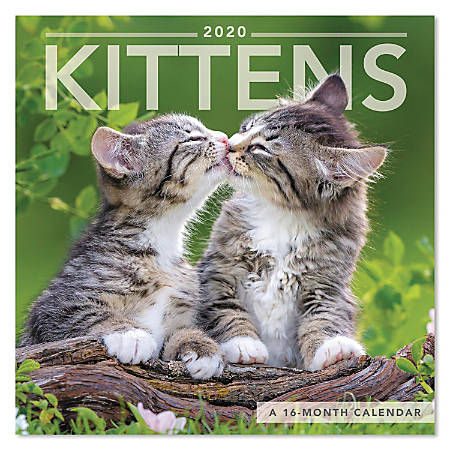 "Mead® Kittens Mini Monthly Wall Calendar, 7"" x 7"", January to December 2020, ODMN49-28"