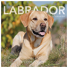 Landmark Labrador Retrievers Monthly Wall Calendar