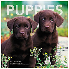 Landmark Puppies Monthly Wall Calendar 12