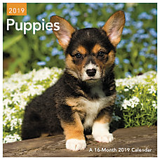 Day Dream Puppies Mini Monthly Wall