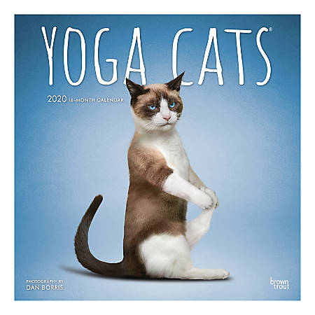 """Brown Trout Monthly Wall Calendar, 12"""" x 12"""", Yoga Cats, January to December 2020"""