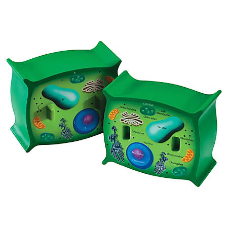 """Learning Resources® Plant Cell Cross-Section Model, 6"""" x 5 1/2"""", Grades 6-12"""