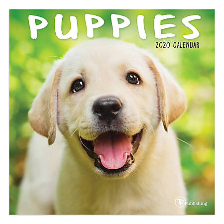 """TF Publishing Monthly Wall Calendar, 12"""" x 12"""", Puppies, January To December 2020"""