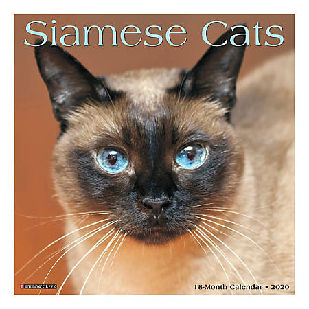 "Willow Creek Press Animals Monthly Wall Calendar, 12"" x 12"", Siamese Cats, January To December 2020"