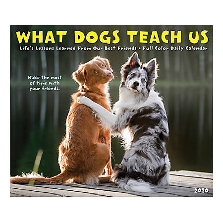 """Willow Creek Press Page-A-Day Daily Desk Calendar, 5-1/2"""" x 6-1/4"""", What Dogs Teach Us, January to December 2020, 09024"""