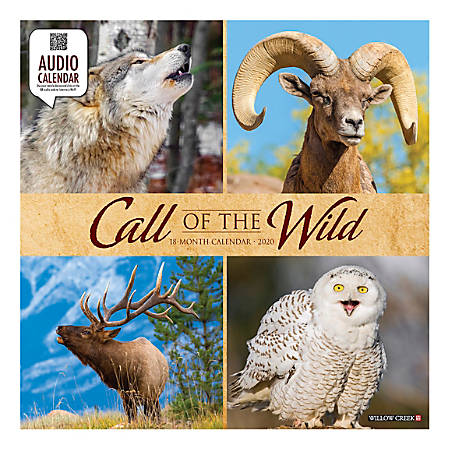 "Willow Creek Press Animals Monthly Wall Calendar, 12"" x 12"", Call Of The Wild, January To December 2020"