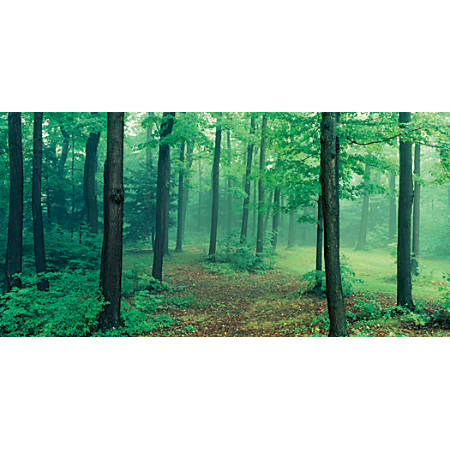 "Biggies Wall Mural, 60"" x 120"", Misty Forest"