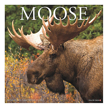"""Willow Creek Press Animals Monthly Wall Calendar, 12"""" x 12"""", Moose, January To December 2020"""