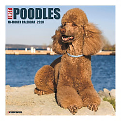 """Willow Creek Press Animals Monthly Wall Calendar, 12"""" x 12"""", Poodles, January To December 2020"""