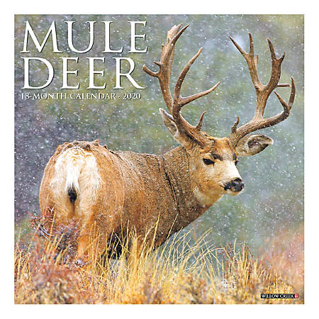 "Willow Creek Press Animals Monthly Wall Calendar, 12"" x 12"", Mule Deer, January To December 2020"