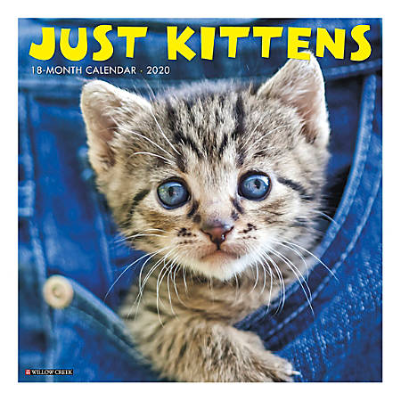 "Willow Creek Press Animals Monthly Wall Calendar, 12"" x 12"", Kittens, January To December 2020"