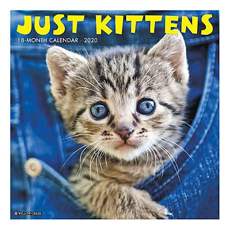 "Willow Creek Press Animals Monthly Wall Calendar, 12"" x 12"", Kittens, January To December 2020"