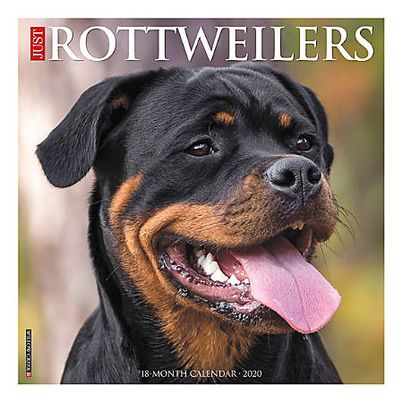 "Willow Creek Press Animals Monthly Wall Calendar, 12"" x 12"", Rottweilers, January To December 2020"