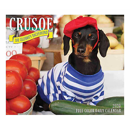 """Willow Creek Press Page-A-Day Daily Desk Calendar, 5-1/2"""" x 6-1/4"""", Crusoe, January to December 2020, 08836"""