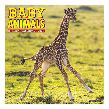 """Willow Creek Press Animals Monthly Wall Calendar, 12"""" x 12"""", Baby Animals, January To December 2020"""